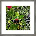 Mindo Butterfly At Rest Framed Print by Al Bourassa