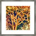 Mineral Branches Hot Springs Framed Print