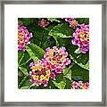 Mini Flowers Framed Print