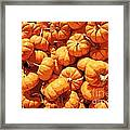 Mini Pumpkins Framed Print