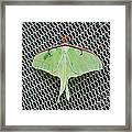 Mint Green Luna Moth Framed Print