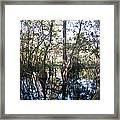 Mirroring The Swamp Framed Print