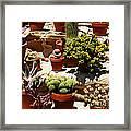 Mission Cactus Garden Framed Print