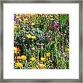Mixed Wildflowers Framed Print