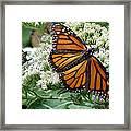 Monarch Butterfly 52 Framed Print