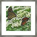 Monarch Butterfly 56 Framed Print