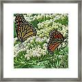 Monarch Butterfly 57 Framed Print