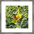 Monarch Butterfly And Guest Framed Print