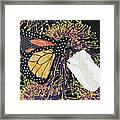Monarch Butterfly On White Tulip Framed Print by Lynda K Boardman