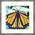 Monarch I Framed Print