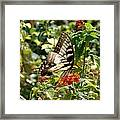 Monarch Pause Framed Print