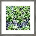 Monkey Grass Abstract Framed Print