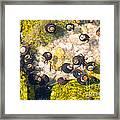 Monterey Bay Tide Pools Framed Print