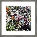 Monterey Indian Paintbrush And Ice Plant Framed Print by Bruce Gourley