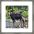 Moose And Baby 4 Framed Print