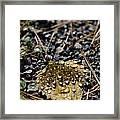 Morning Dew On Autumn Leaf Framed Print