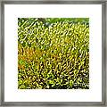 Moss And Fruiting Bodies - Green Lane Pa Framed Print