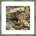 Moss And Lichens In The Scottish Highlands Framed Print