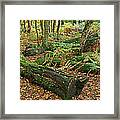 Moss Covered Logs On The Forest Floor Framed Print