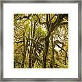 Moss-covered Maple Grove Framed Print