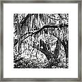 Moss In A Magical Land Framed Print