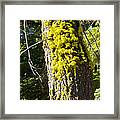 Moss On Tree Along Sentinel Dome Trail In Yosemite Np-ca Framed Print
