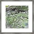 Moss Rock Framed Print