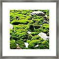 Mosscape Framed Print