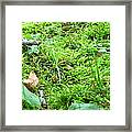 Mossy Bed Framed Print