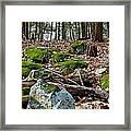 Mossy Rocks Framed Print