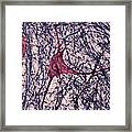Motor Neuron, Cat Spinal Cord Framed Print