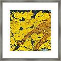 Motor Oil On Yellow Framed Print by Robert Knight