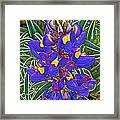 Mountain Lupine In Ancient Incan Pisac In Andes Mountains Above Sacred Valley-peru   Framed Print