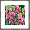 Mountain Meadows' Paintbrush Framed Print