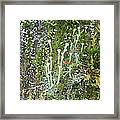 Mountain Moss Lichens And Fungi Framed Print