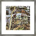Mountain Spring Beauty  Framed Print