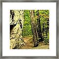Mountain Trail Framed Print