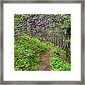 Mountain Trail With Catawba Rhododendron Framed Print