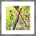 Mr Mantis Framed Print