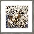 Mule Deer   #0061 Framed Print