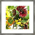 Multi-color Sunflowers Framed Print