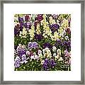 Multi-colored Blooms Framed Print