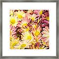 Multi-colored Daisies Framed Print