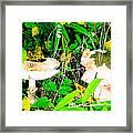 Mushroom Abstract # 3 Framed Print