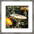 Mushroom Tops Framed Print