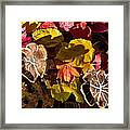 Mushrooms In Fall Leaves Framed Print