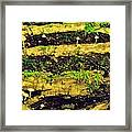 Mushrooms Lichen And Moss On Log Framed Print