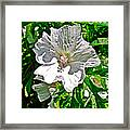 Musk Mallow Along Trail To Cap Gaspe In Forillon National Park-quebec  Framed Print