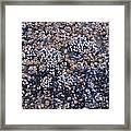 Mussels And Barnacles, Low Tide Framed Print