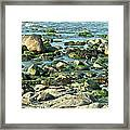 Mussels And Moss Framed Print